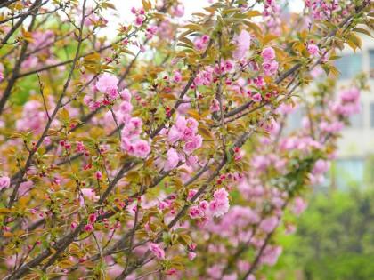 邵阳城区绿意盎然 春景正盛