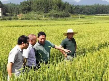 为了大地的丰收——五年来邵阳市农田水利建设工作成就综述